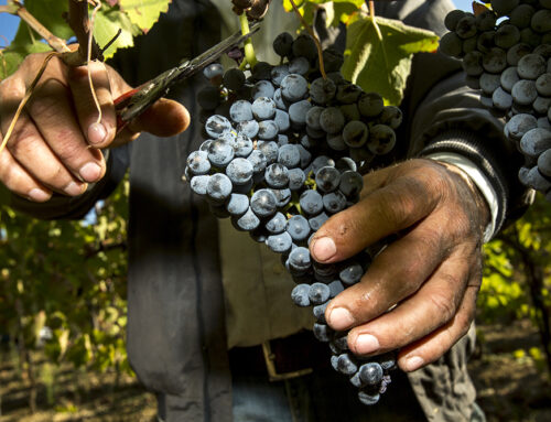 Il vino più richiesto